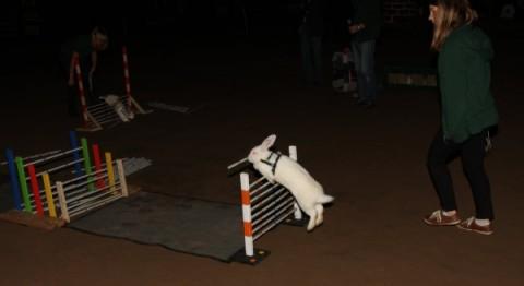 Der_Bunny-Jump_HP